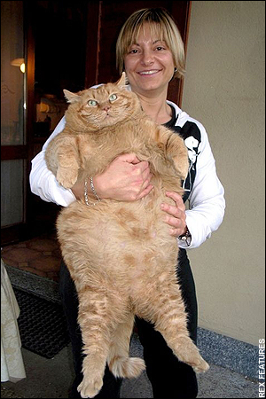woman holding a very large cat